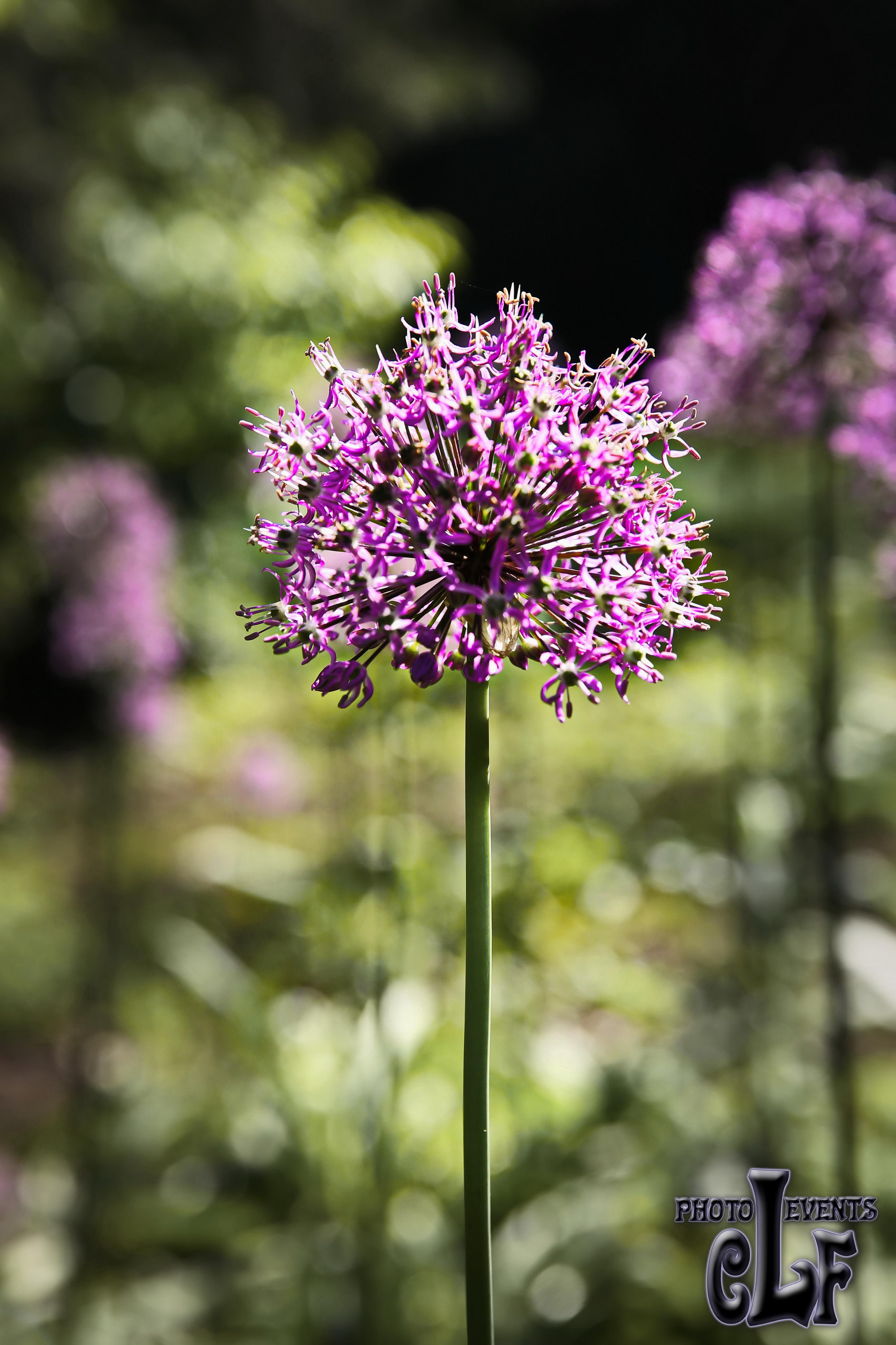 Flowers Flori