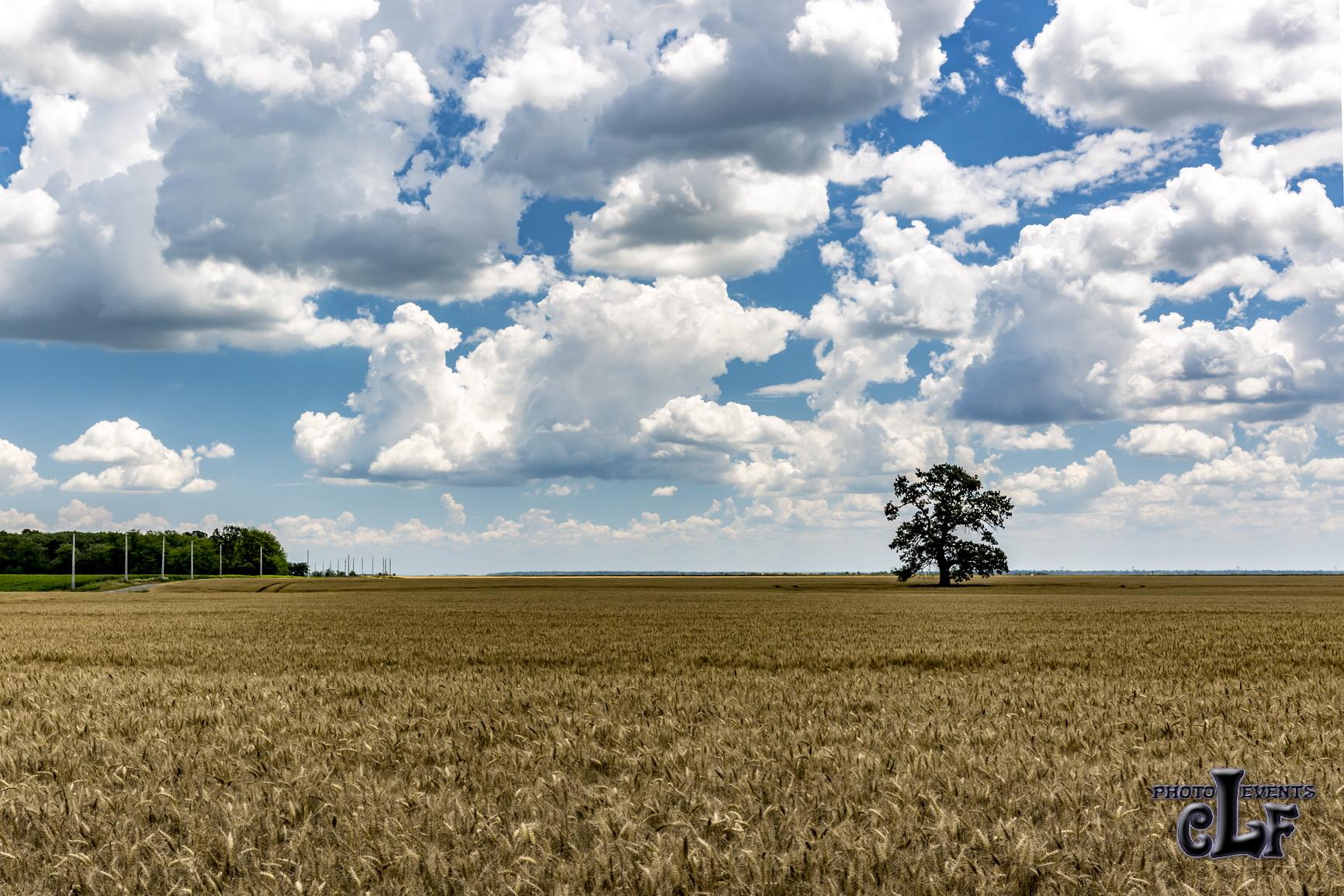 Landscape - Peisaj